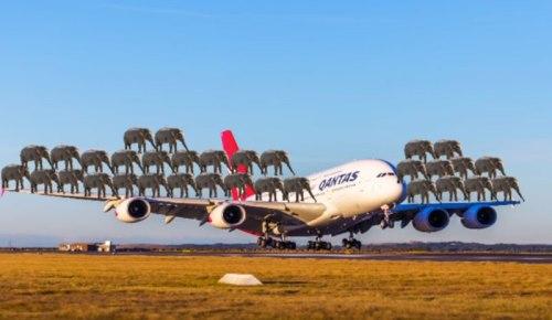 fly-og-elefanter